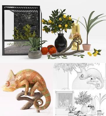 现代植物变色龙