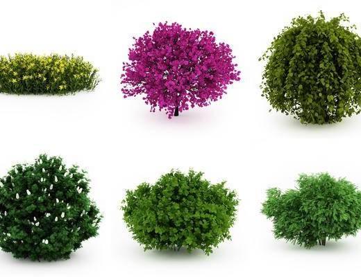 植物, 花卉, 树木, 现代