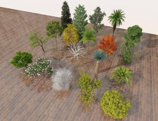 鸟瞰树, 行道树, 庭院树, 四季树, 树木组合