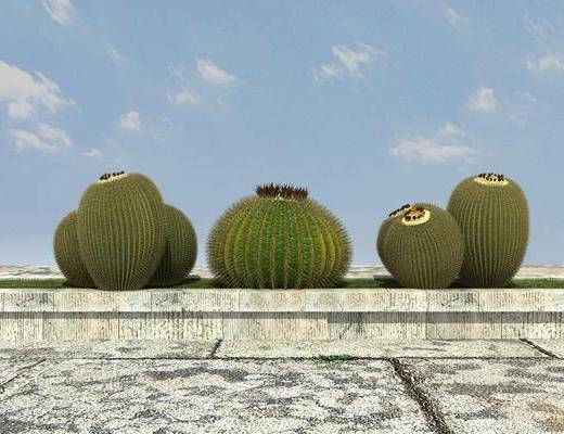 绿化, 植物, 组合