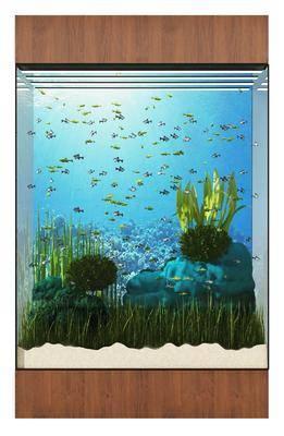 现代, 鱼缸, 鱼, 水草, 组合