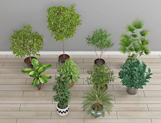 现代盆栽, 盆栽, 植物