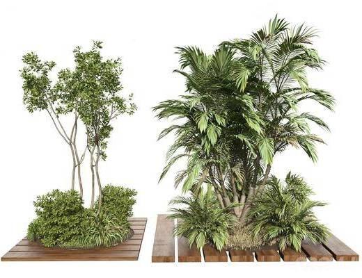 现代景观树