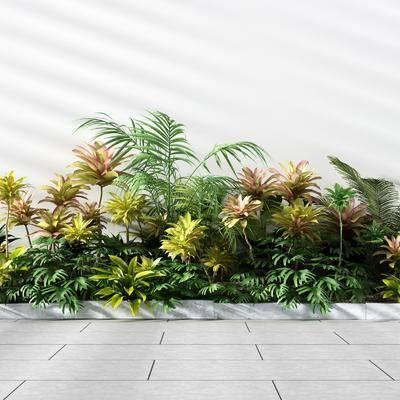 植物灌木, 植物组合, 现代