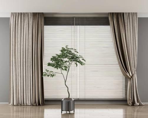 百叶窗, 窗帘, 纱窗, 植物