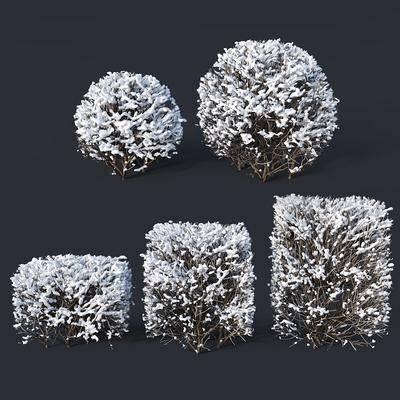 雪樹灌木, 現代