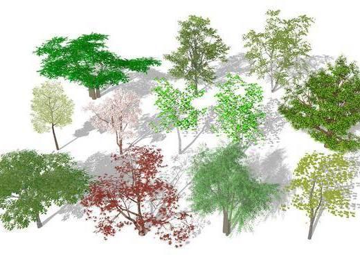 树木, 植物, 景观树