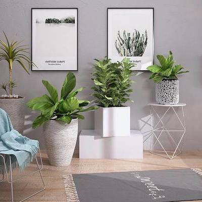 盆栽组合, 衣服, 椅子, 台灯, 地毯, 装饰画