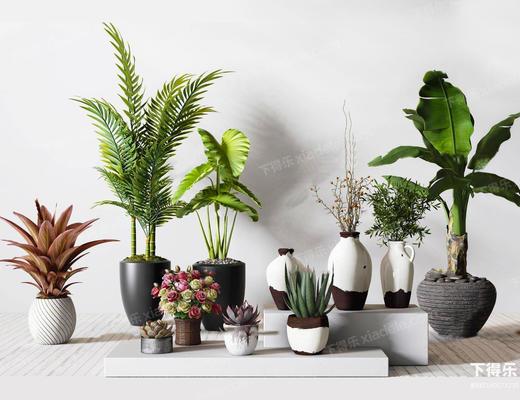 现代简约, 植物盆栽, 植物组合