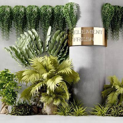 植物植物, 盆栽组合, 现代