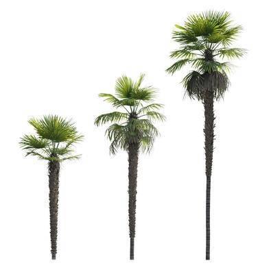 热带树木, 植物, 树木