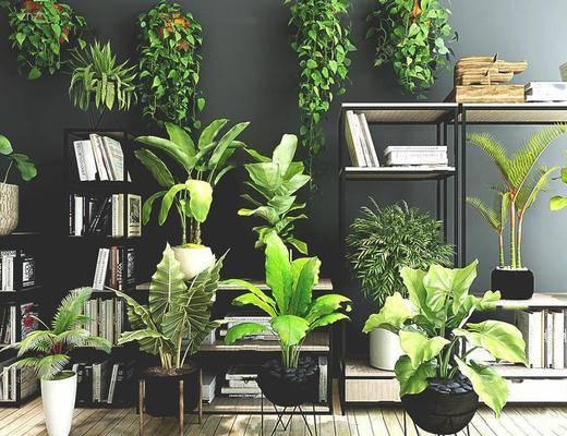 现代简约, 植物盆栽, 植物组合, 现代植物, 现代