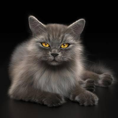 猫, 动物
