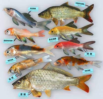 现代, 鱼类, 单体