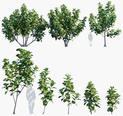 現代, 植物, 樹木