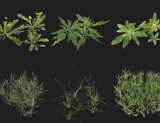 植物花草, 植物, 现代