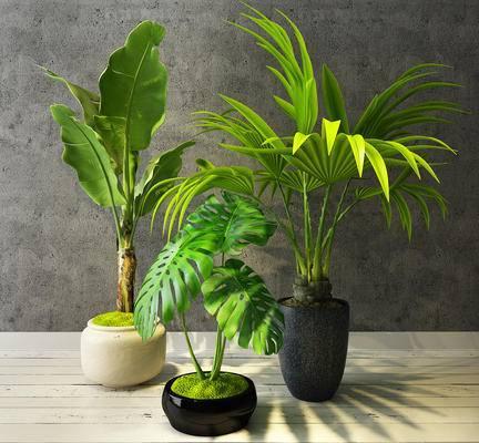 盆栽, 绿植