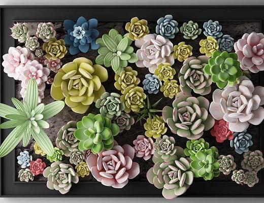 花草, 墙挂, 植物, 绿植, 多肉植物