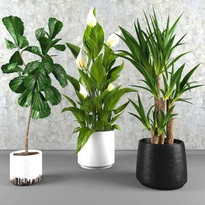 盆栽, 植物, 绿植, 现代