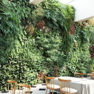 现代绿植墙餐桌椅组合, 现代, 植物墙, 餐桌椅, 椅子