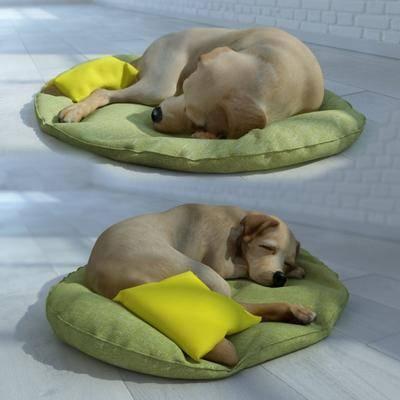 狗, 睡垫, 现代