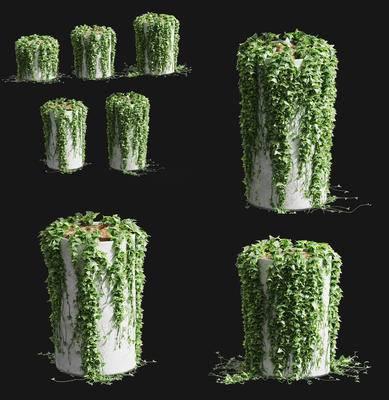 藤蔓, 植物, 爬藤