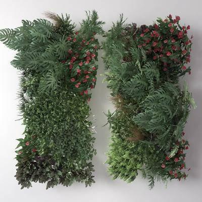 藤蔓, 植物墙