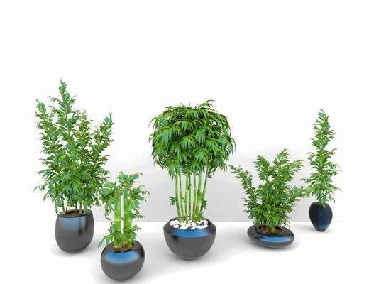 竹子, 盆栽植物, 花盆