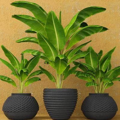 盆栽, 植物, 花盆, 现代