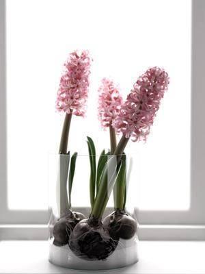 花瓶, 花, 现代