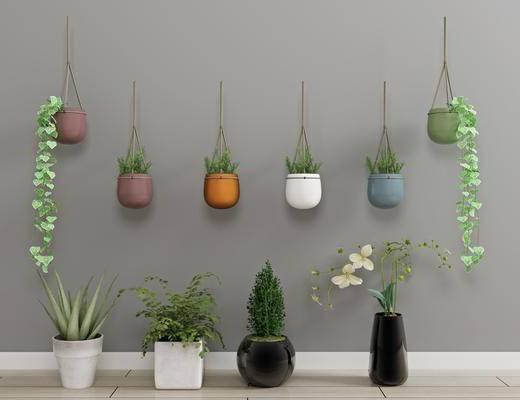 绿植盆栽, 绿植植物, 现代