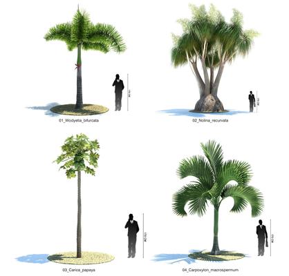 灌木, 树, Evermotion, Archmodels, EV