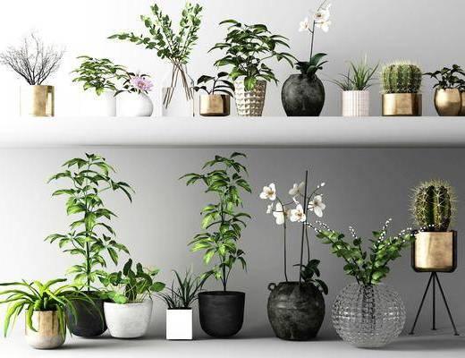 盆栽, 植物, 盆景, 绿植