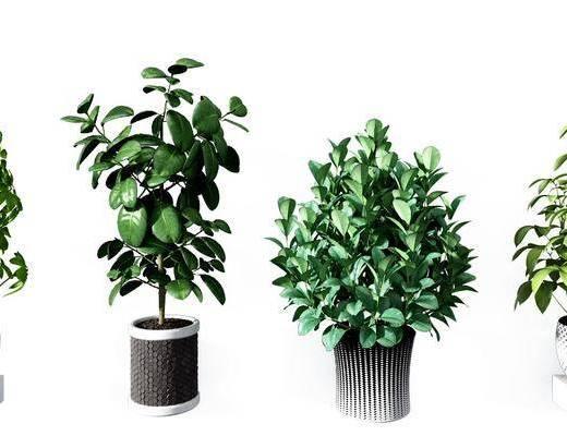 盆栽组合, 绿植植物, 现代