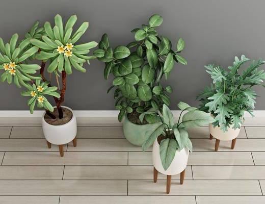 现代绿植, 盆栽, 植物, 绿植