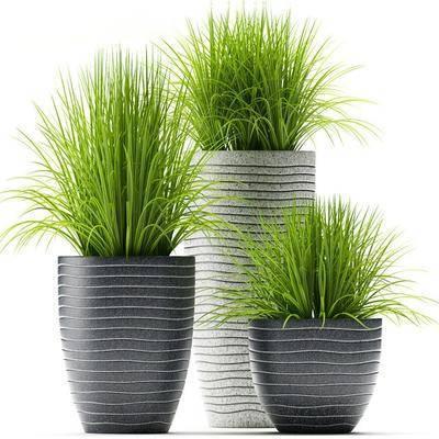 画盆, 盆栽, 植物, 现代