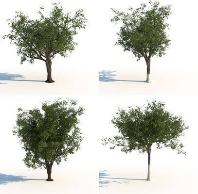 树木, 植物, 花草