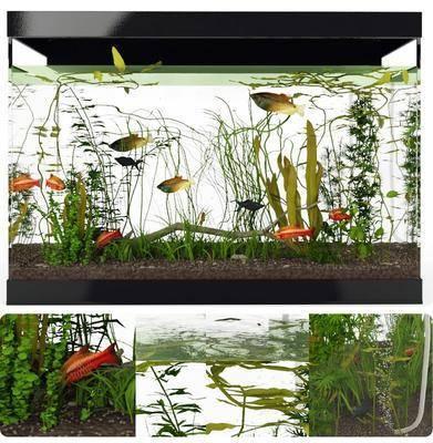 鱼缸水族, 现代鱼缸, 鱼, 植物, 玻璃鱼缸, 现代