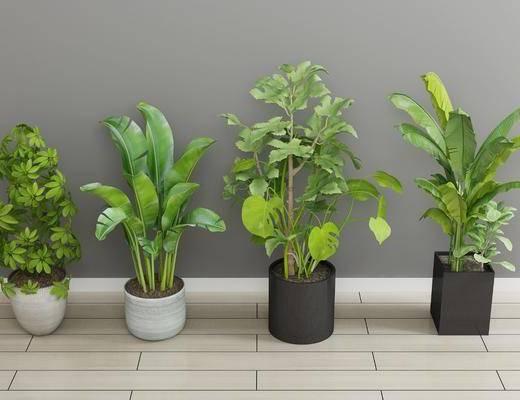 现代绿植, 绿植, 植物, 盆栽