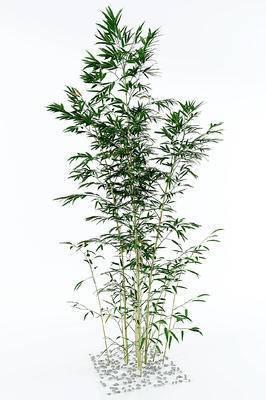 现代竹子, 植物
