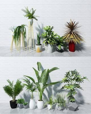 小盆栽, 装饰盆栽, 植物盆栽