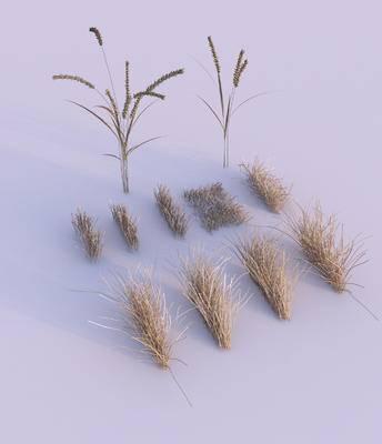 花草, 草地, 枯草, 现代草地, 植物, 现代, 双十一