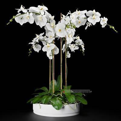 现代花艺植物, 现代, 植物, 花卉, 盆栽