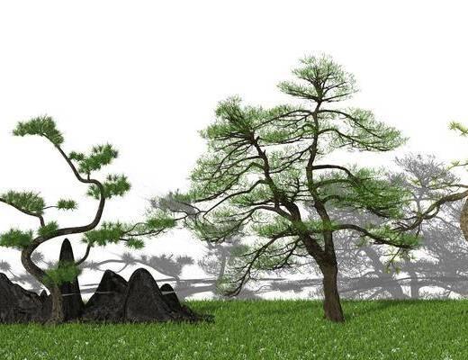 树木, 盆景