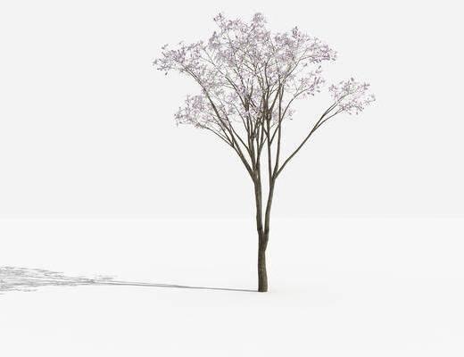 树木, 灌木, 植物, 绿化植物, 景观植物, 花草