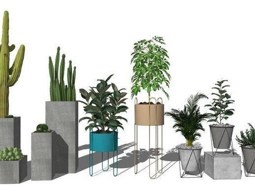 盆栽植物, 花草植物