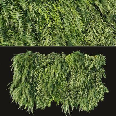 植物墙, 背景墙, 绿植植物, 现代