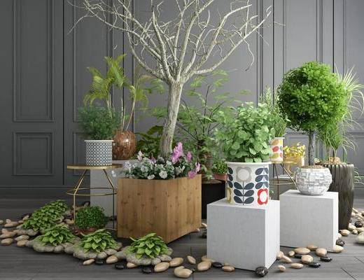 植物盆栽, 树枝组合, 绿植植物, 树木, 干树枝, 现代