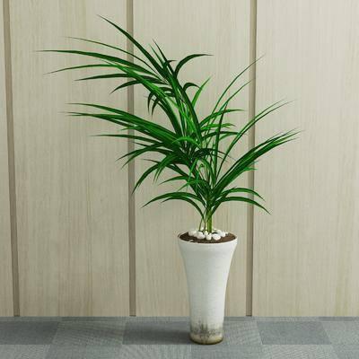 植物, 盆栽, 室内盆栽, 现代盆栽, 现代, 绿植