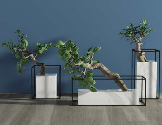 绿植, 盆栽, 装饰品, 植物